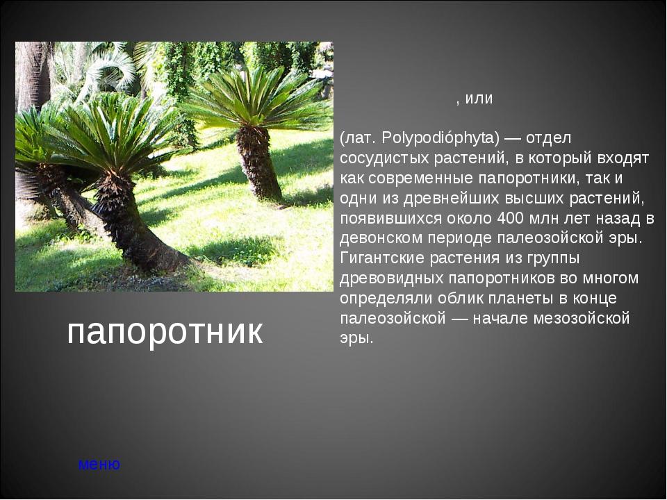 папоротник меню Па́поротники, или папоротникови́дные расте́ния (лат.Polypodi...