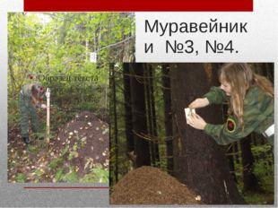 Муравейники №3, №4.
