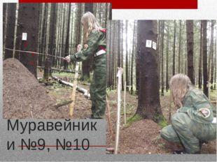 Муравейники №9, №10