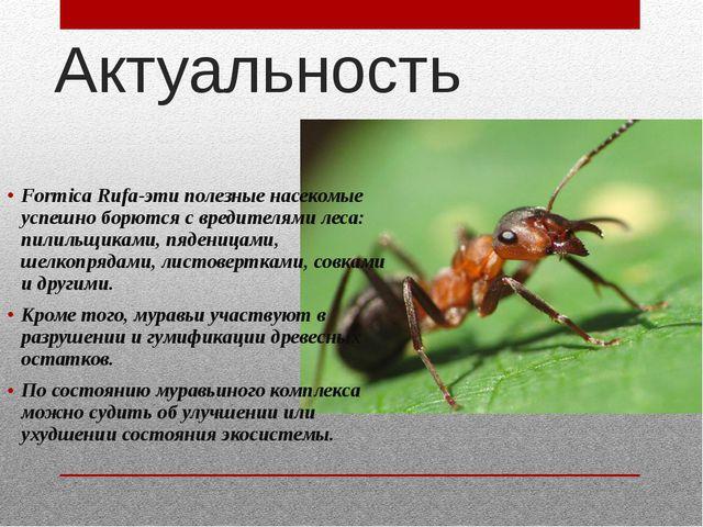 Актуальность Formica Rufa-эти полезные насекомые успешно борются с вредителям...