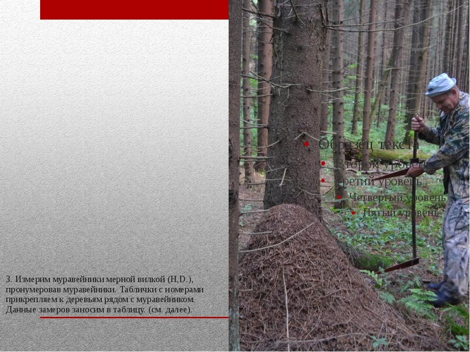 3. Измерим муравейники мерной вилкой (H,D.), пронумеровав муравейники. Таблич...
