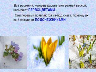 Все растения, которые расцветают ранней весной, называют ПЕРВОЦВЕТАМИ. Они п