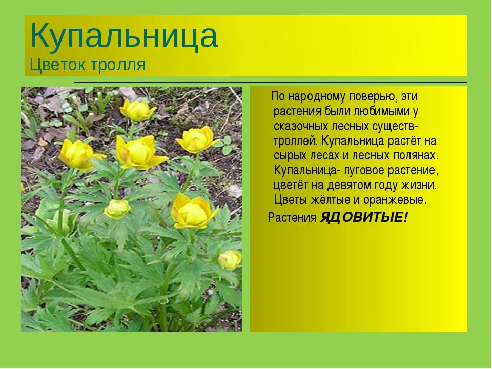 По народному поверью, эти растения были любимыми у сказочных лесных существ-...