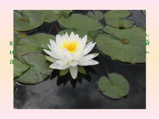 Вопрос 1 У этого растения длинный стебель, круглые плавающие листья и белый н