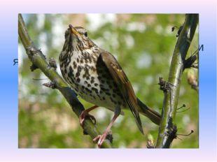 Какая птица подбрасывает свои яйца в чужие гнезда? Вопрос 1