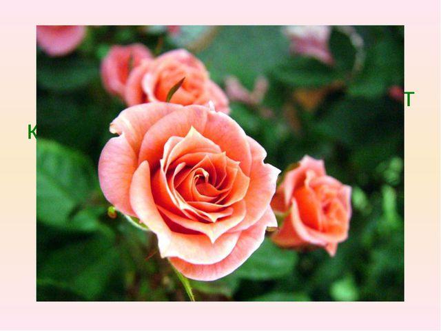 Вопрос 3 Какое растение называют королевой цветов.