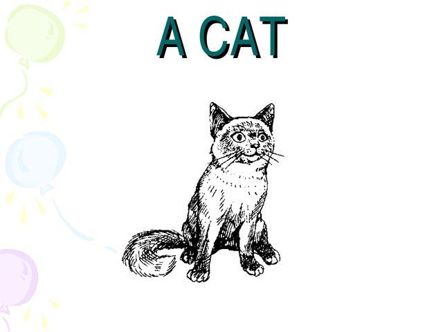 A CAT
