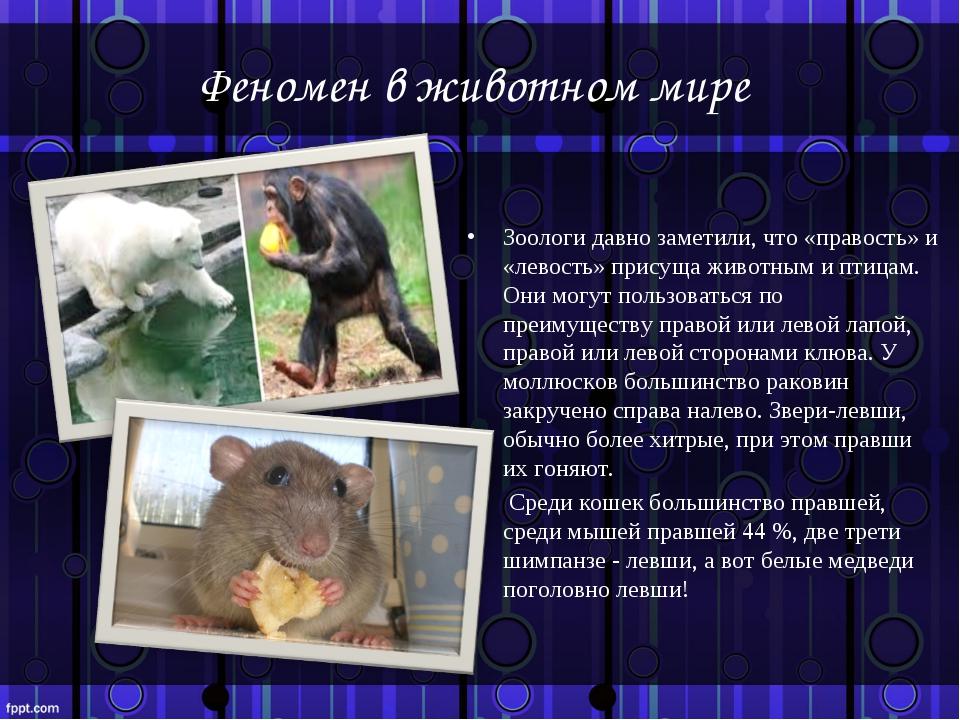Феномен в животном мире Зоологи давно заметили, что «правость» и «левость» пр...