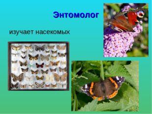 Энтомолог изучает насекомых