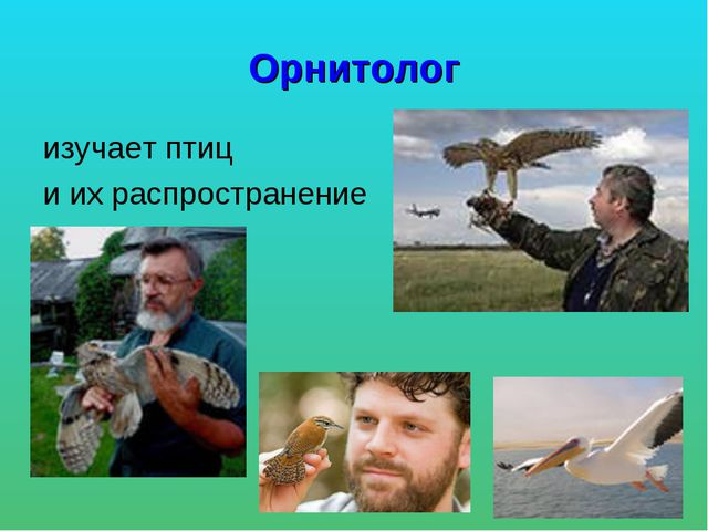 Орнитолог изучает птиц и их распространение