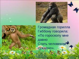 Громадная горилла Гиббону говорила: «По гороскопу мне давно Стать человеком с