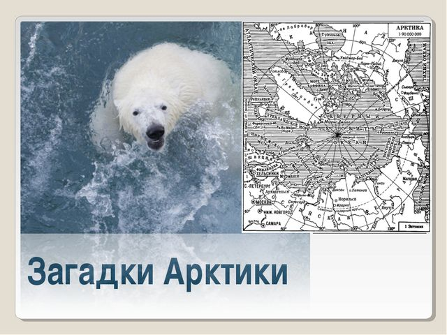 Загадки Арктики