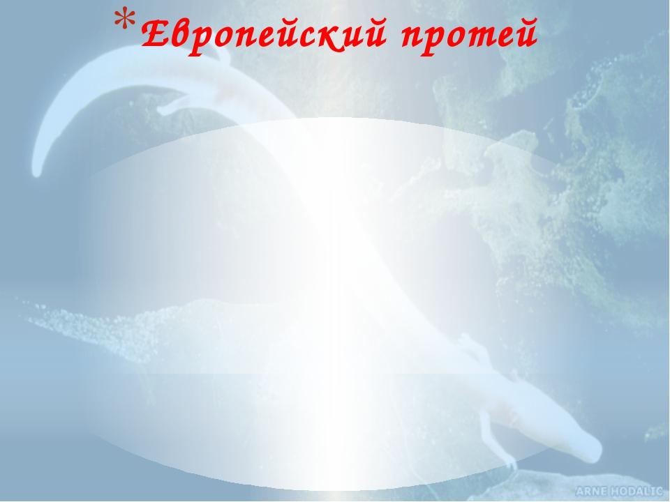 Европейский протей