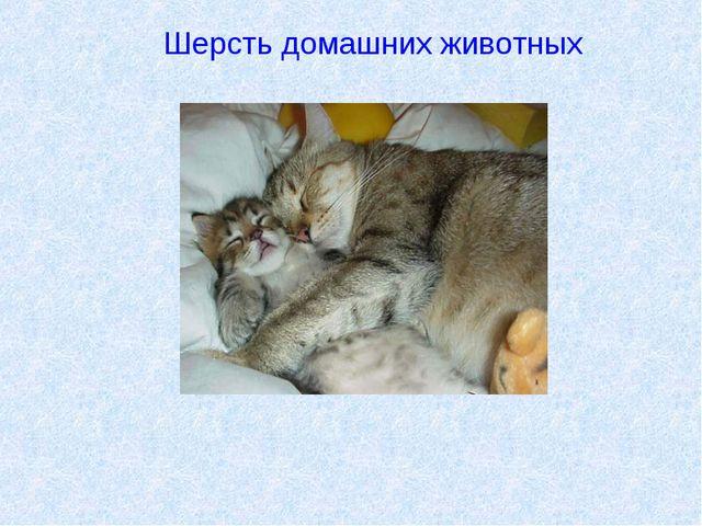 Шерсть домашних животных