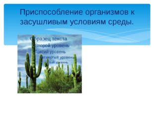 Приспособление организмов к засушливым условиям среды.
