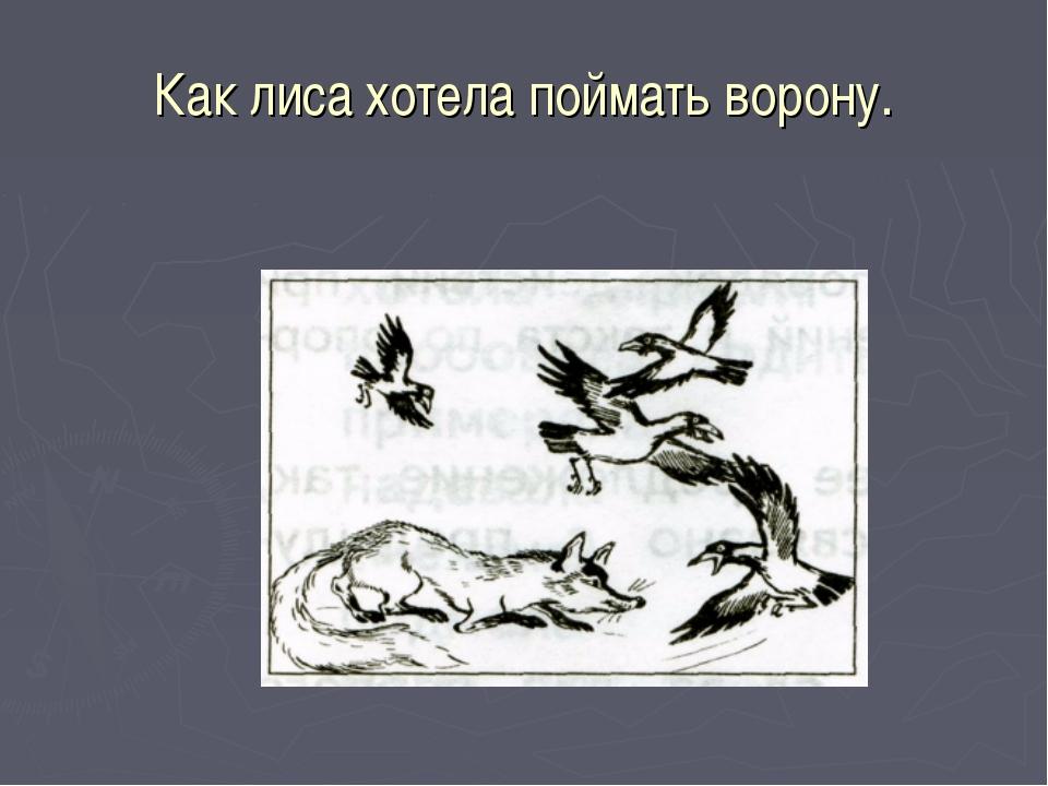 Как лиса хотела поймать ворону.