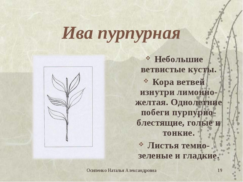 Ива пурпурная Небольшие ветвистые кусты. Кора ветвей изнутри лимонно-желтая....