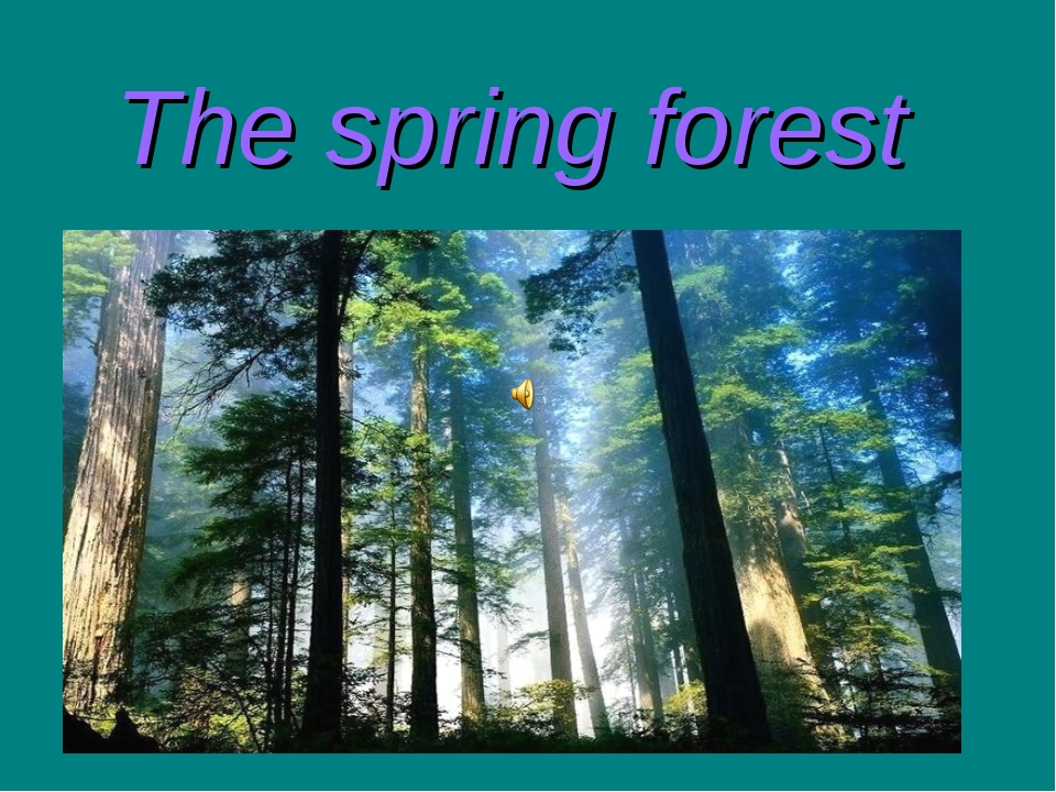 The spring forest