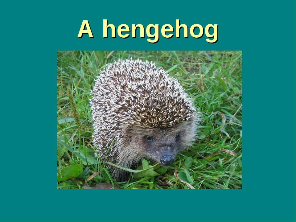 A hengehog