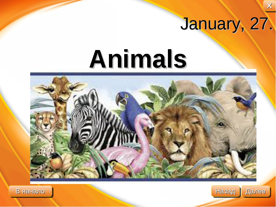 January, 27. Animals В начало Далее Назад X