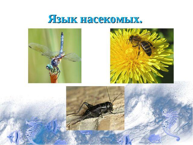 Язык насекомых.