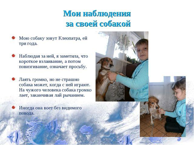 Мои наблюдения за своей собакой Мою собаку зовут Клеопатра, ей три года. Набл...