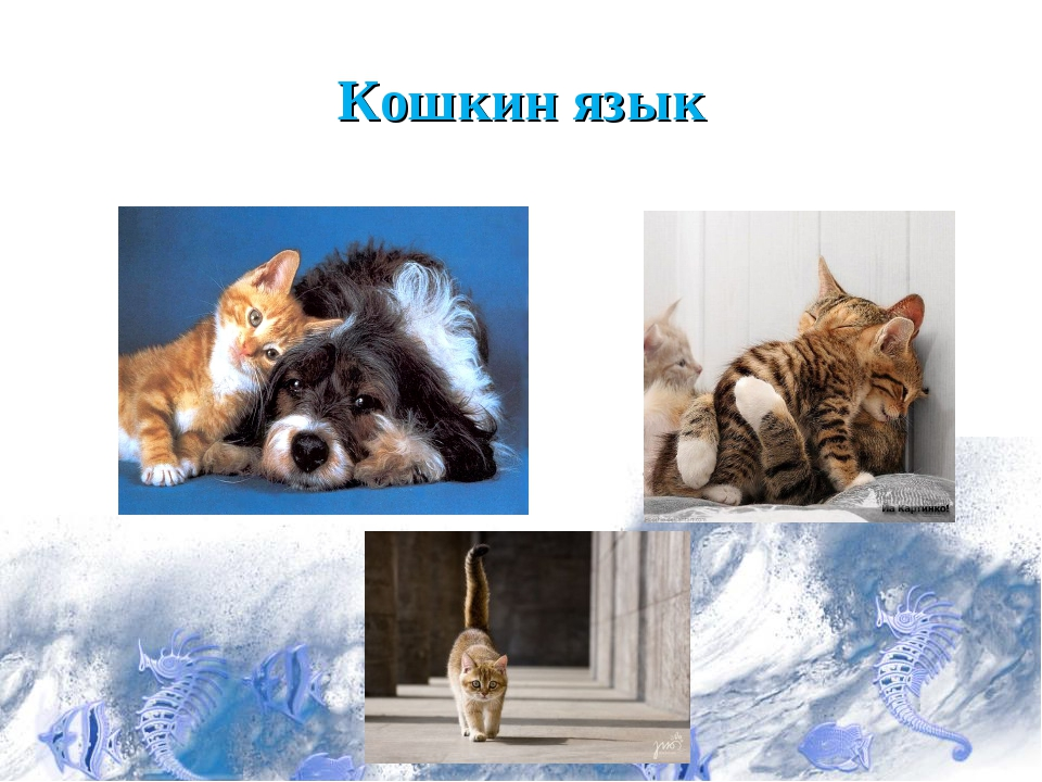 Кошкин язык