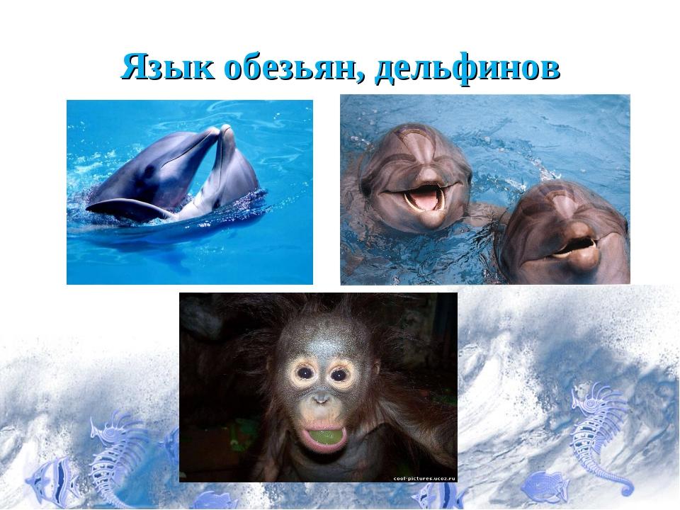Язык обезьян, дельфинов