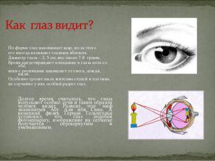 По форме глаз напоминает шар, из-за этого его иногда называют глазным яблоко