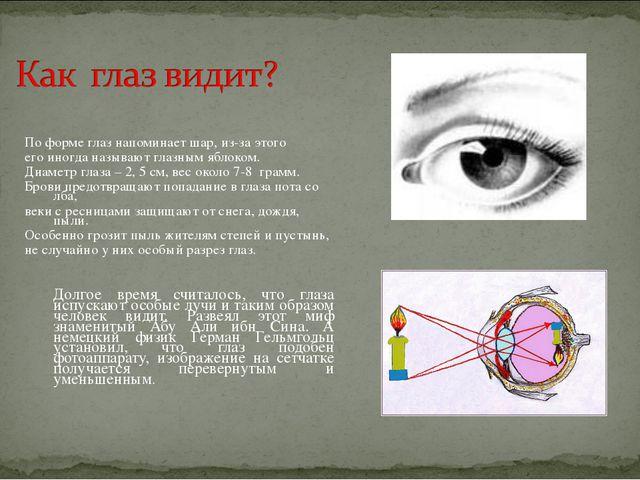 По форме глаз напоминает шар, из-за этого его иногда называют глазным яблоко...