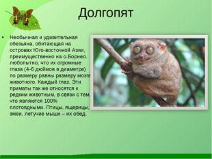 Долгопят Необычная и удивительная обезьяна, обитающая на островах Юго-восточн