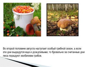Во второй половине августа наступает особый грибной сезон, а если эти дни выд