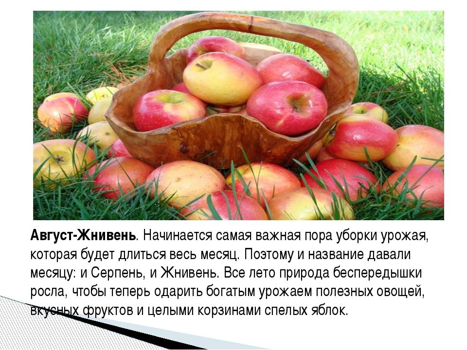 Август-Жнивень. Начинается самая важная пора уборки урожая, которая будет дли...