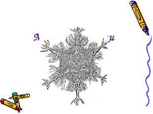 Домашнє завдання Визначите кількість граней, вершин і ребер многогранника, на