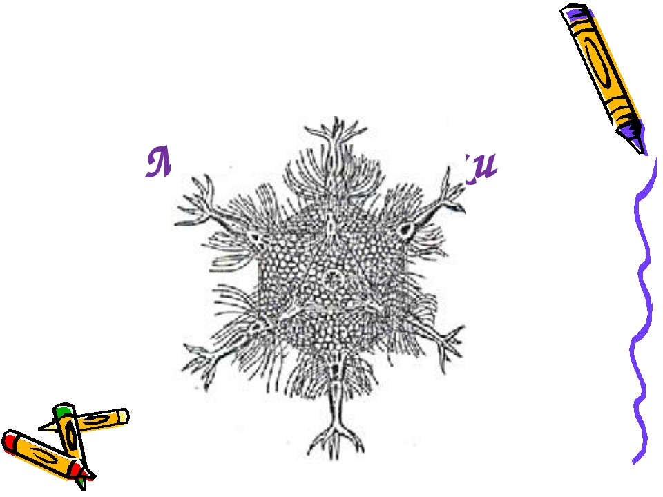 Домашнє завдання Визначите кількість граней, вершин і ребер многогранника, на...