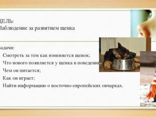 ЦЕЛЬ: Наблюдение за развитием щенка Задачи: Смотреть за тем как изменяется ще