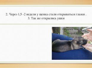 2. Через 1,5 -2 недели у щенка стали открываться глазки . 3. Так же открылись