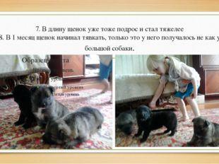 7. В длину щенок уже тоже подрос и стал тяжелее 8. В 1 месяц щенок начинал тя