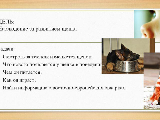 ЦЕЛЬ: Наблюдение за развитием щенка Задачи: Смотреть за тем как изменяется ще...