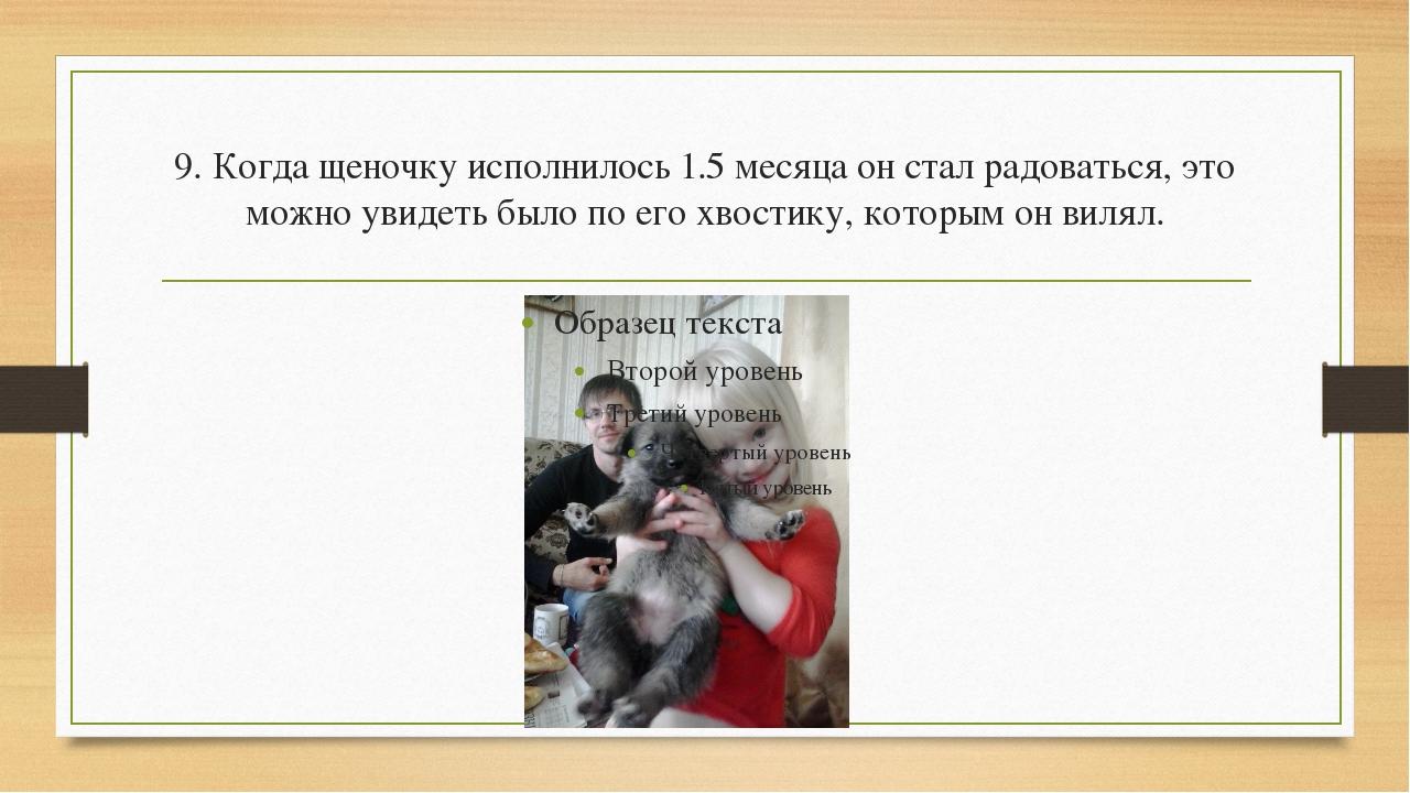 9. Когда щеночку исполнилось 1.5 месяца он стал радоваться, это можно увидеть...