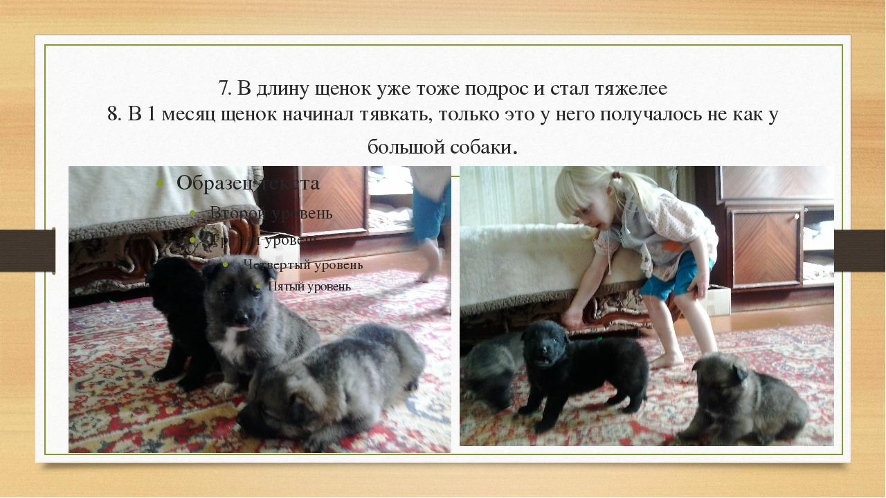 7. В длину щенок уже тоже подрос и стал тяжелее 8. В 1 месяц щенок начинал тя...