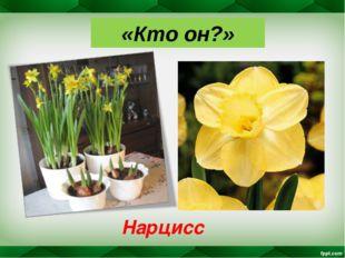 «Кто он?» Нарцисс