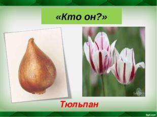 «Кто он?» Тюльпан