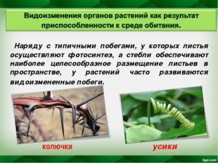 Наряду с типичными побегами, у которых листья осуществляют фотосинтез, а сте