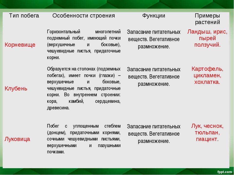 Тип побегаОсобенности строенияФункцииПримеры растений КорневищеГоризонтал...