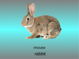 rabbit mouse