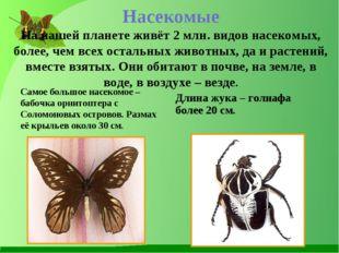 Насекомые На нашей планете живёт 2 млн. видов насекомых, более, чем всех оста