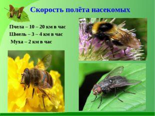 Скорость полёта насекомых Пчела – 10 – 20 км в час Шмель – 3 – 4 км в час Мух