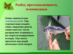 Рыбы, пресмыкающиеся, земноводные Очень занимательна летающая рыба. Она стрем