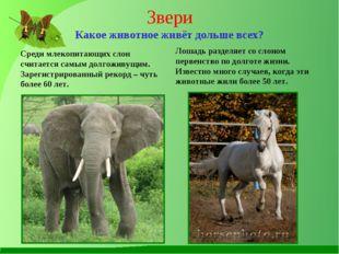 Звери Какое животное живёт дольше всех? Среди млекопитающих слон считается са